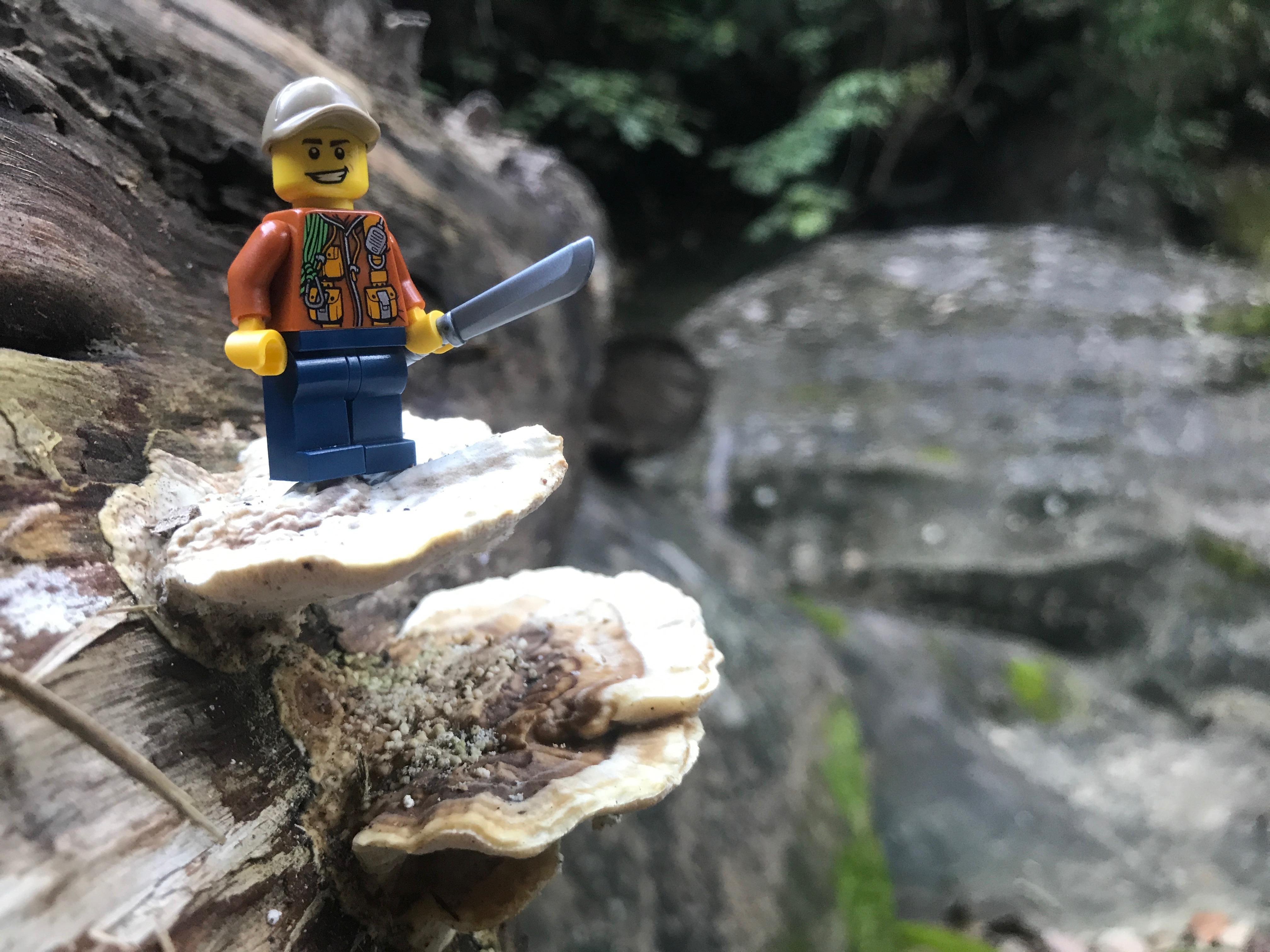 Link a LEGO_CITY_Jungle_5